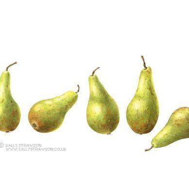 Pears-e1623328196998